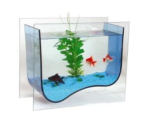 Как правильно перевезти на новое место аквариумных рыбок?