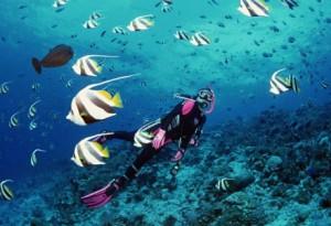 Дайвинг на Симиланских островах