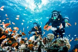 Дайвинг и дайверы на Мальдивах