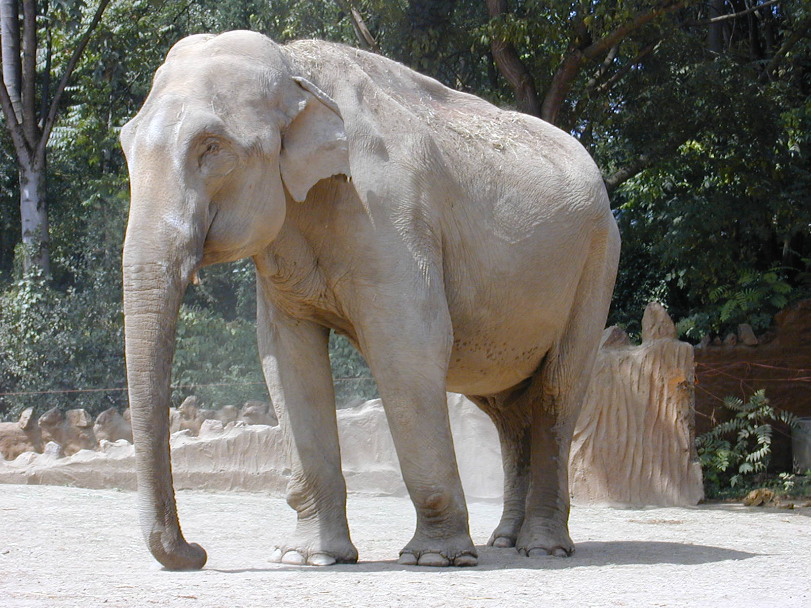 Фауна и Флора Шри-Ланки