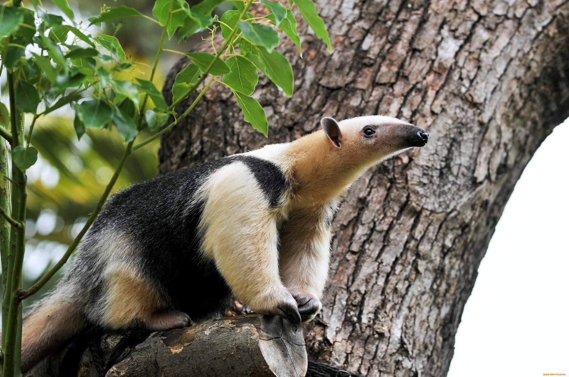 торжество фото животных южной америки школы