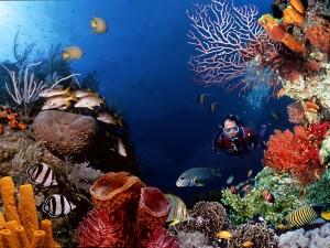 В мире океана: богатство Мальдив