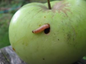 Борьба с вредителями без ядов и химикатов
