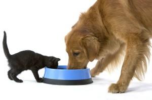 Домашние животные и психология человека