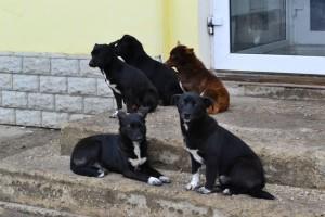 Профосмотр для собаки