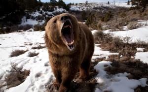 Советы охотникам на бурого медведя