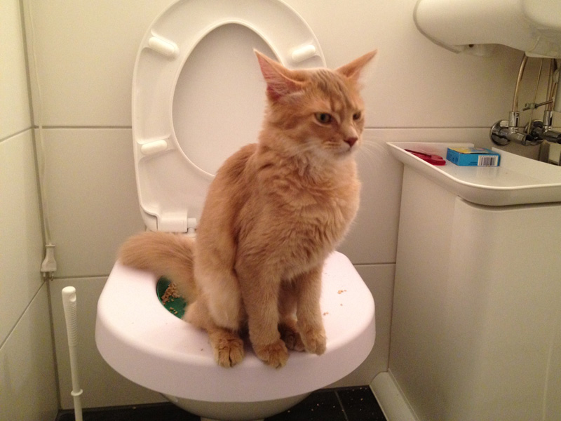 cat started urinating indoors