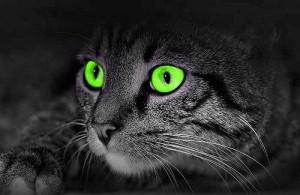 Как видят кошки окружающий мир