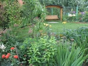 Разнообразие садовых растений на нашем участке