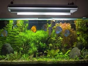 Качественное освещение аквариума