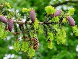 Роль растений в жизни человека