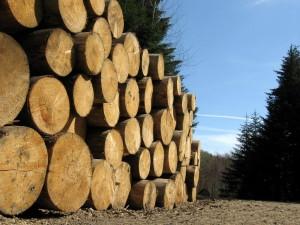 Лесоматериалы. Круглый лес