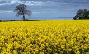 Биотопливо — что это?