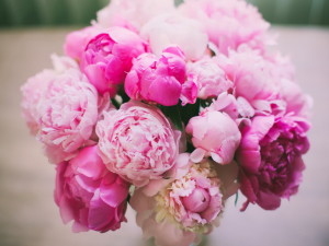 Пионы - цветы любви