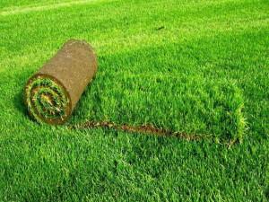 Посевной и рулонный газон