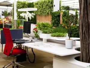 Растения, украшающие офис
