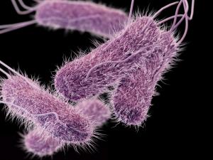 Синегнойная инфекция у детей