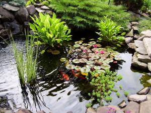 Водный цветник