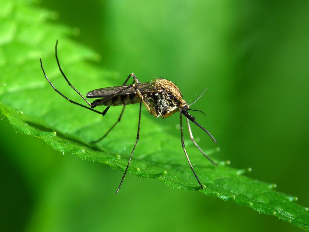 Что отпугивает комаров на природе и дома