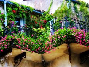 Какие растения идеально приживутся на вашем балконе?