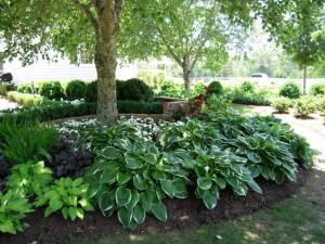 Какие растения лучше высаживать в тенистых зонах сада