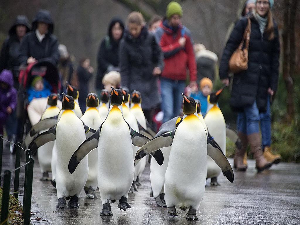 Лучшие Швейцарские зоопарки