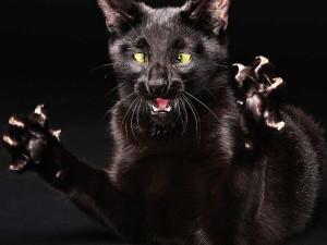 Несколько советов по уходу за лапками кошек