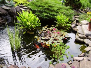 Растения в водоемах, созданных своими руками