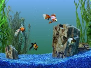 Увлечение аквариумными рыбками
