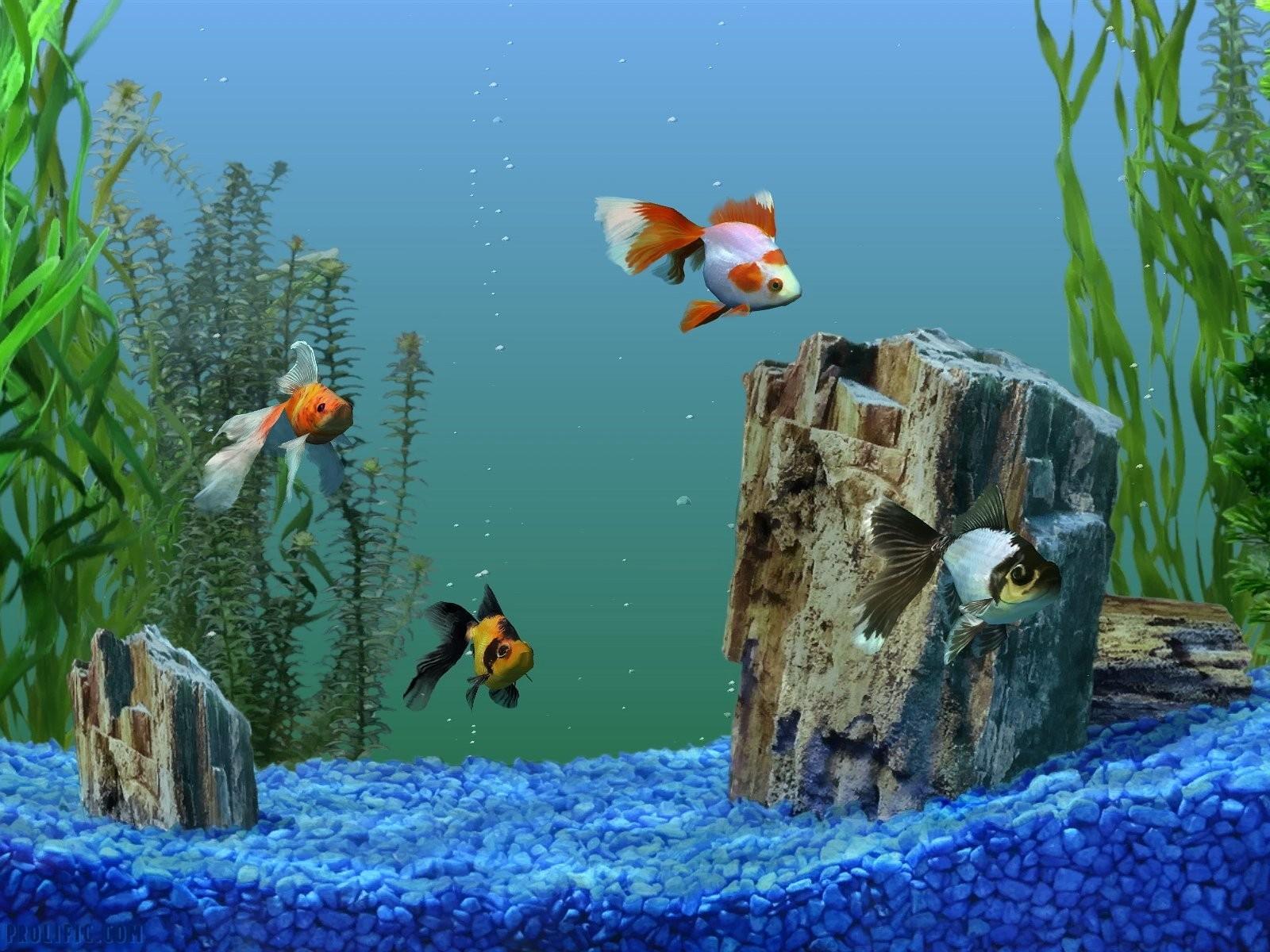 Мая, картинки на рабочий стол рыбки живые они двигаются