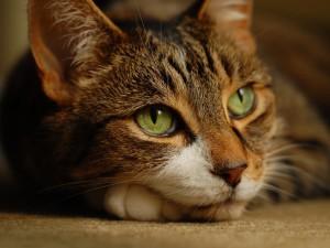 Какие бывают болезни кошек?