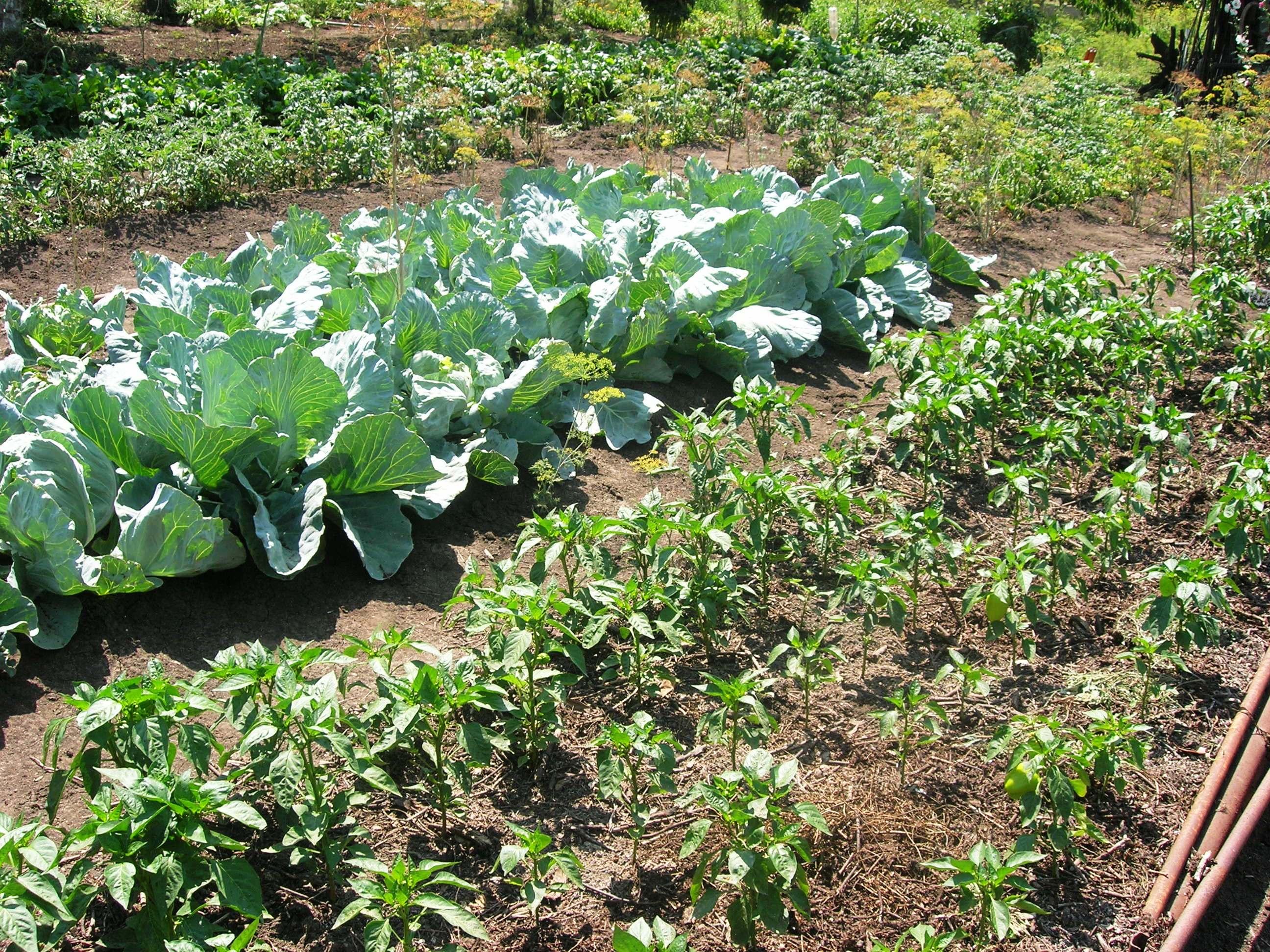 Дачный участок - как место отдыха и сбора урожая