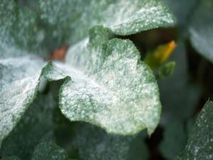 Наиболее распространенные болезни комнатных растений