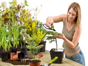 Пересадка комнатных растений растений