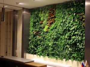Размещение растений дома и в офисе