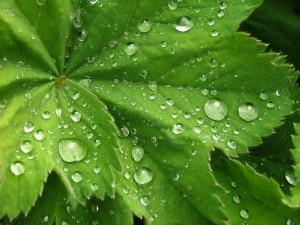 Влияние воздуха и влажности на растения