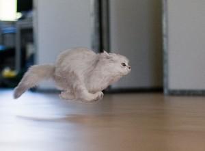 Кошка в движении