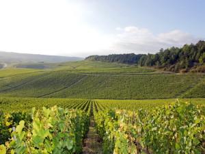 Производители вина Бургундии