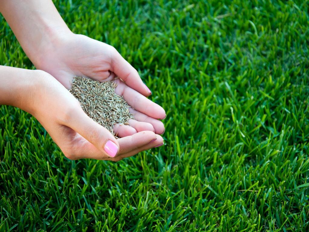 Разбиваем сеяный газон