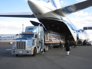 Современные авиаперевозки грузов