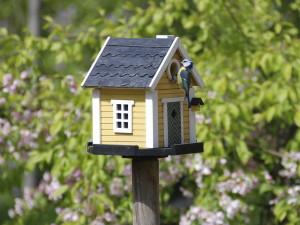 Строим домики и кормушки птицам