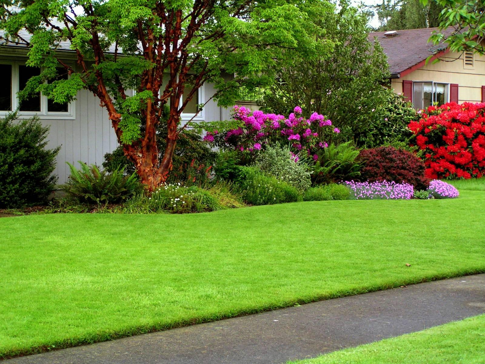 Травянистый газон