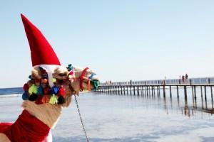 Новогодние каникулы в Египте