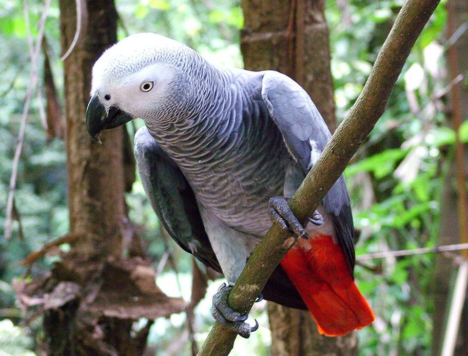 Особенности веточного корма для попугаев