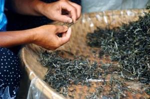 Шен Пуэр - Древний вид чая