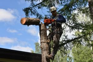 Удаление деревьев (способы и виды удаления деревьев)