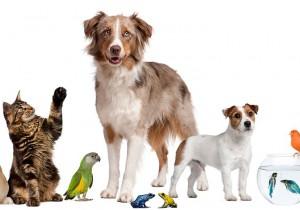 Интернет - зоомагазин для животных