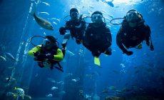 Что подарить мужчине, увлеченному дайвингом или подводной охотой?